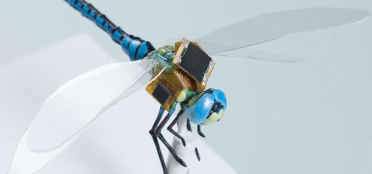 Hátamon a zsákom… A szitakötő hátizsákja a valódi rovart optogenetikailag vezérelt drónná alakítja Forrás: http://www.draper.com/news/equipping-insects-special-service